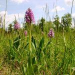 1.5.08-orhideje Sturmovci 044