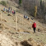 Prostovoljna akcija sajenja visokodebelnih sadnih dreves Čerinovo