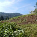 2018_08_08_Kum_C1_izvajanja del_kmetija Jamšek  (8)