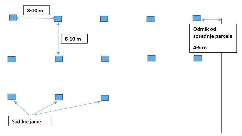 Sadilne razdalje in odmik od objektov in sosednjih parcel